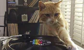 Cat Doing DJ Stuffs