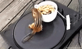 Chipmunk DJ Loop