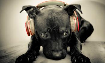Dog DJ