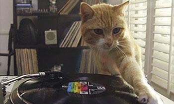 Cat Doing DJ Stuffs