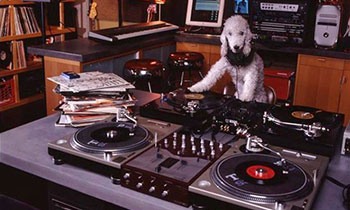 DJ Scruffy Woof