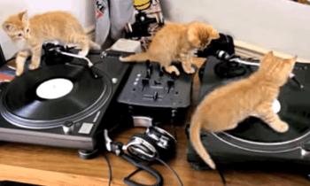Three Kitten Mix