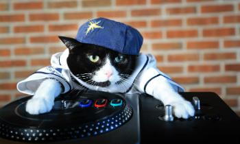 Gangster Cat DJ